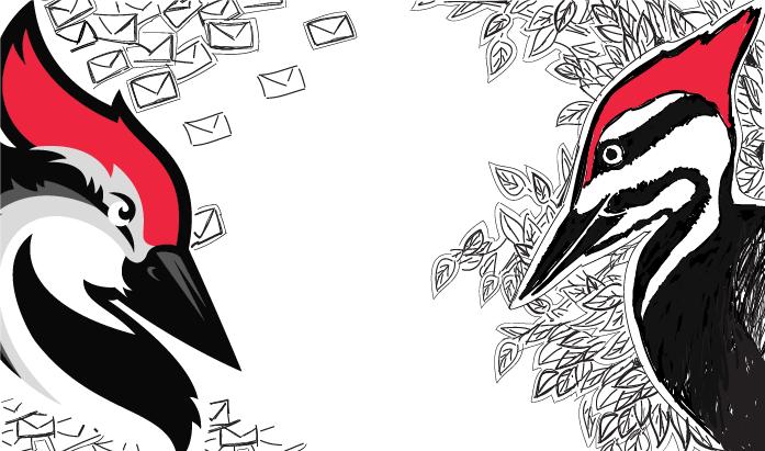 1000 customers woodpecker.co